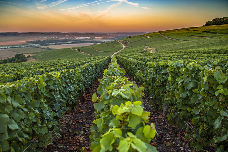 Régions - Champagne - Vignoble - Hesam Sanaee